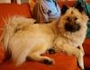 Hamika auf der Couch